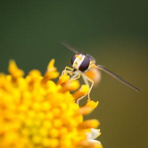 花粉はタイ語で
